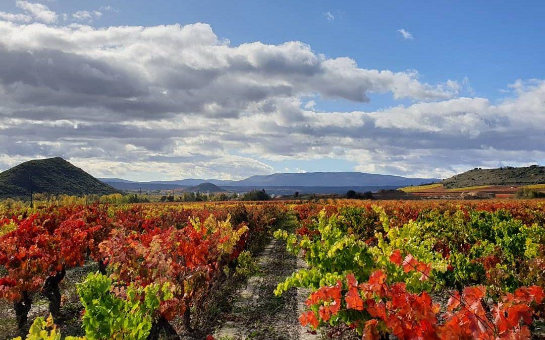 Márqueting y Storytelling en La Rioja
