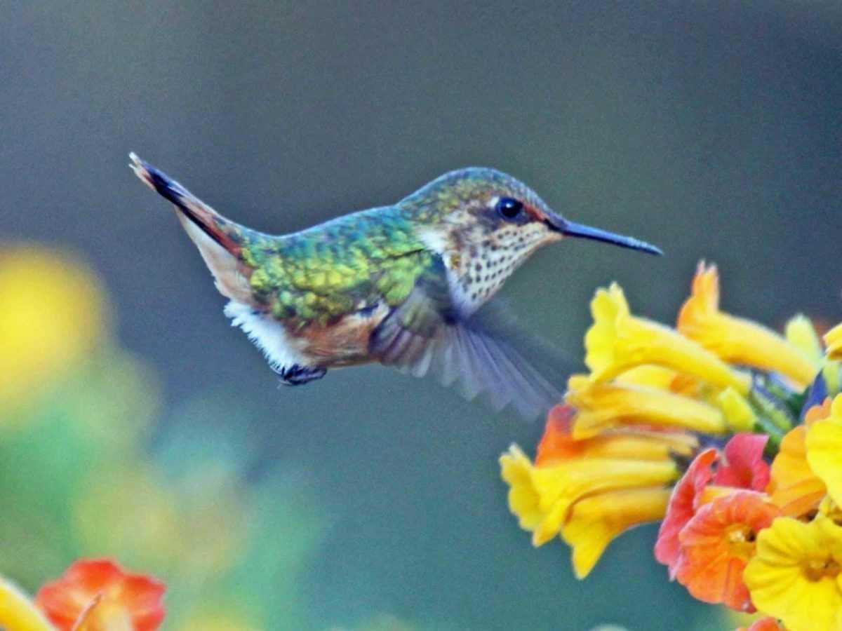 Descubriendo a Hummingbird, el nuevo algoritmo de Google